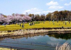 印西市のデートスポット北総花の丘公園