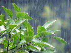 印西歴史・木下洪水